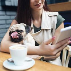 Lower North Shore Dog-Friendly Cafes/restaurants